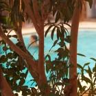 La piscine à travers les arbres