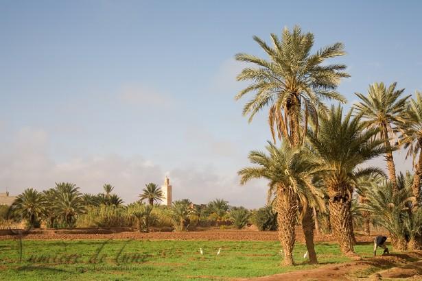 Les champs de Tabount